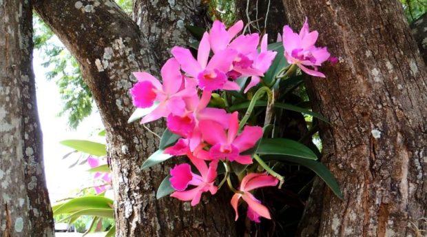 orquidea-em-vaso-nao-na-arvore-veja-como-afixar-e-cuidar-800x445